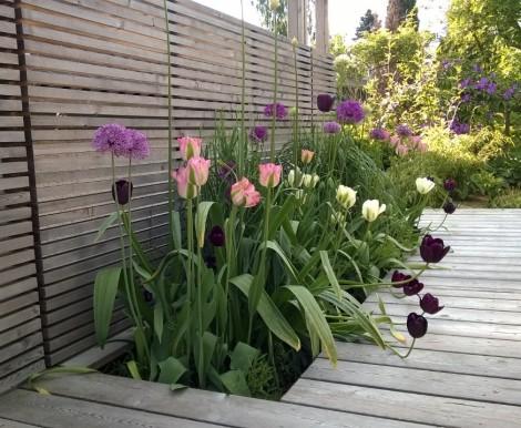 Gress, prydløk og tulipaner i fin kontrast til de horisontale spilene i leveggen